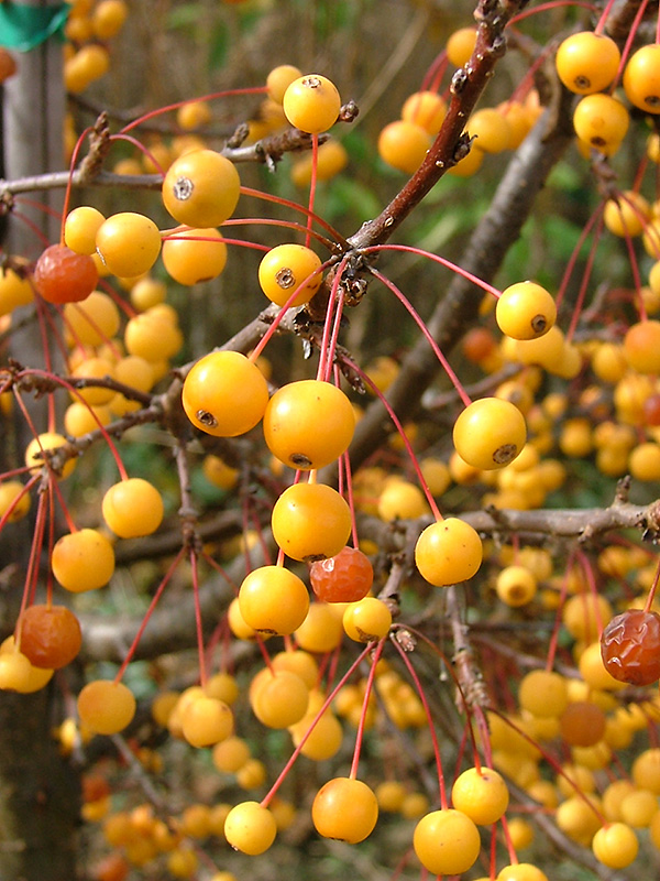 Uming You Have The Correct Pollinator Tree For Fruit That Your Trees