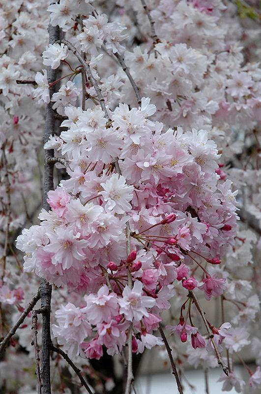 H046-02 Bloom Garden Design on garden leaf, garden wells, garden park, garden love, garden grow, garden hall, garden day, garden forest,