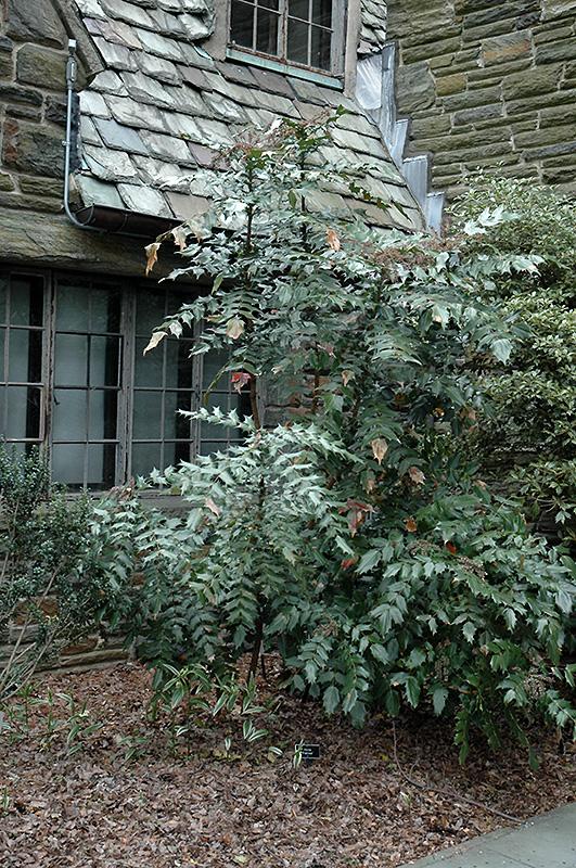 Garden Screening Plants